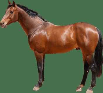 Leilão de Cavalos Online